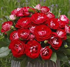 Rose_der_Einheit_4.jpg