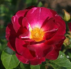 Ile-de-Fleurs_01.jpg