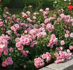 Home_und_Garden_3