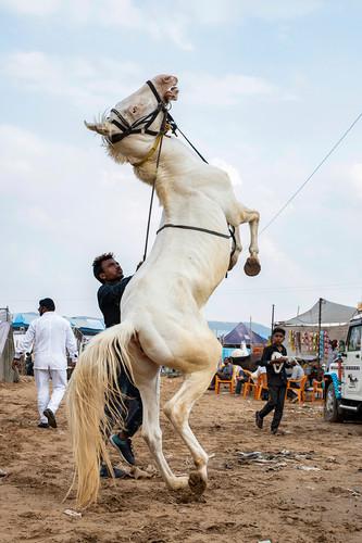 INDIA - PUSHKAR FAIR 2019 - 8437.jpg