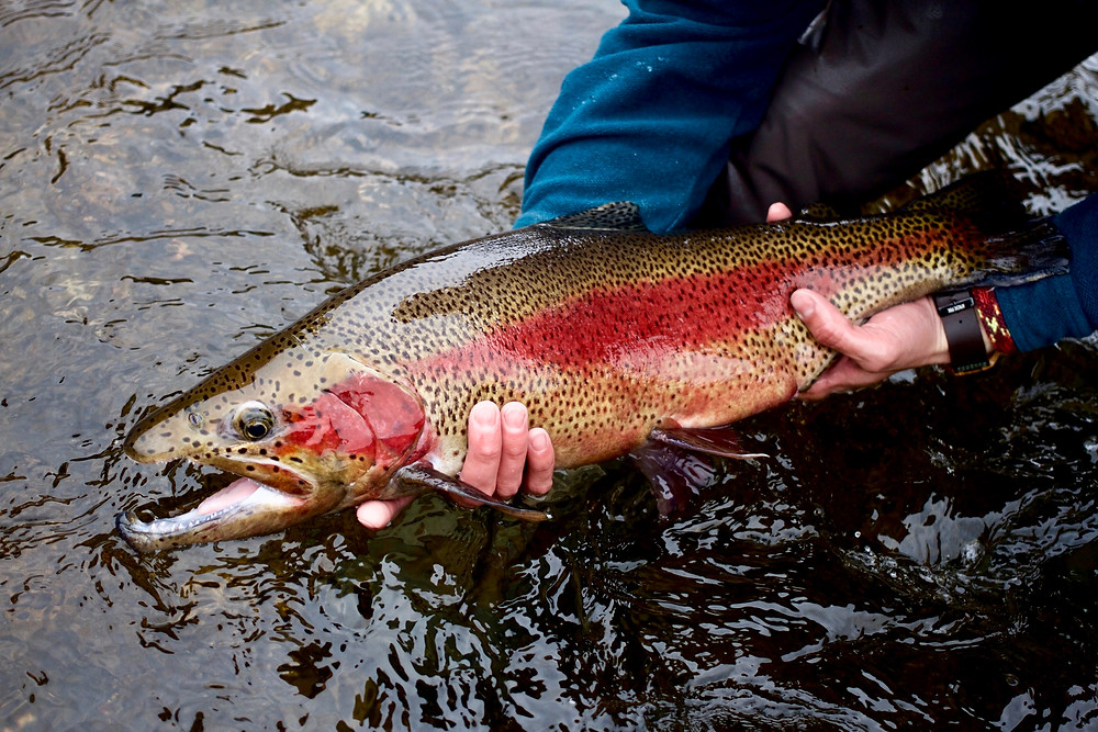 Taylor River Fly Fishing Guides