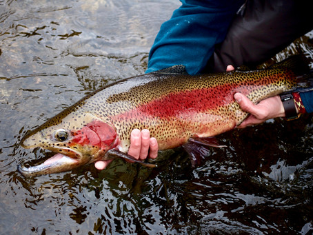 AEI's Backyard - Fly Fishing the Taylor River