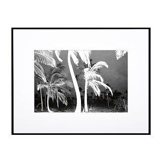 La folle nuit des palmiers - Crapo