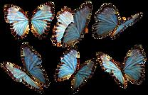 butterflies1.png