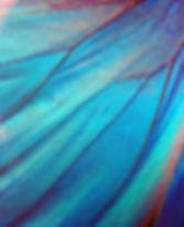 Detail of morpho butterfly wing.jpg