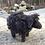 Thumbnail: Black Sheep Needle Felting Kit,
