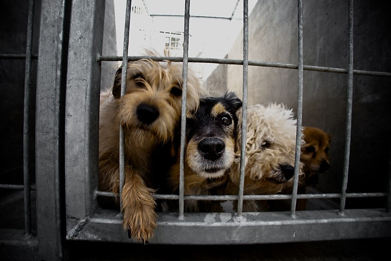 dogs in cage.jpg