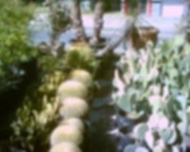 Echinocactus_grusonii.jpg