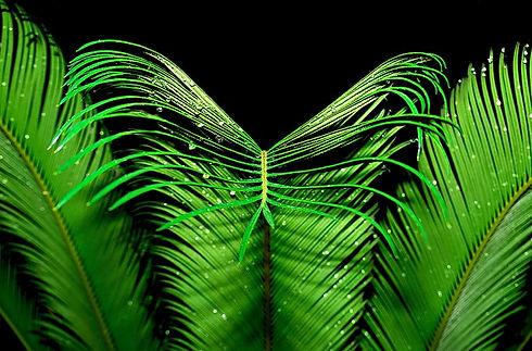symmetry-palm-plant-green.jpg
