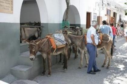 lindos donkeys.webp