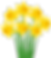 Yellow_Daffodils_PNG_Transparent_Clip_Ar