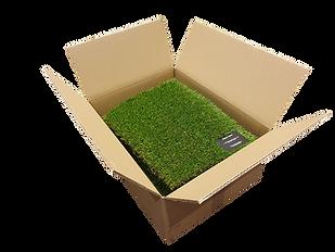 Sample Box 2.png