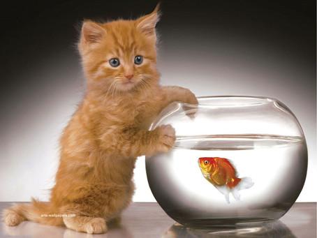 Always Change the Cat Litter!
