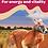 Thumbnail: Kangaroo Health Sticks  (100g)