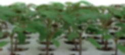 Growfoam visual2.PNG
