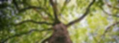 functional biodegradation_edited.jpg