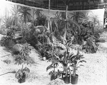 Marinduque Island jungle – Stage #36, May 5, 1977