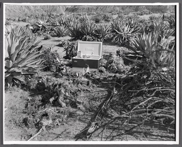 Coleman Cooler in the Borrego Desert, 1971