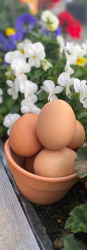 Dippy Egg Free Range
