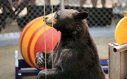 clarks-trained-bears-400x250.jpg