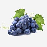 Blue Berry.JPG