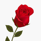 Dutch Roses.JPG