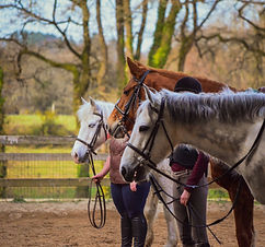 montoir chevaux