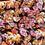 Thumbnail: Flowers 1