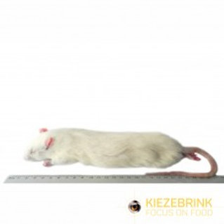 KIEZEBRINK Large Mouse -  X5