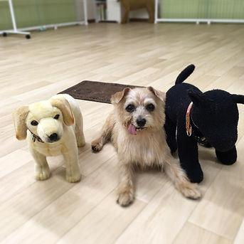 staffdogs2