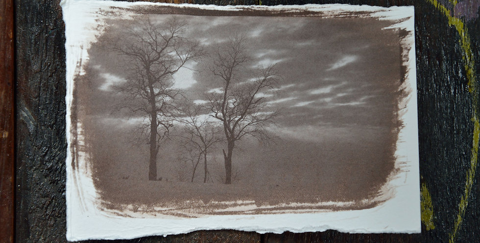 "4x6 ""Pennsylvania Locust Trees at Sunset"""