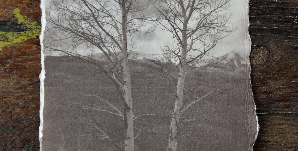 "4x6 ""Twin Aspen of Crested Butte"""