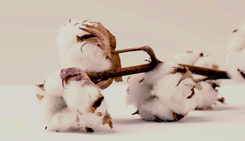 Cotton - Soutien Postnatal