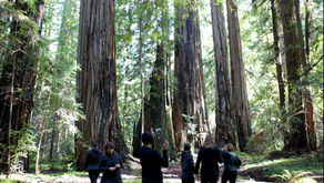 Music for Redwood Trees