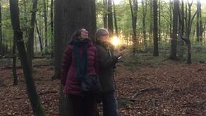 Music for Trees - Kunsthalle Wilhelmshaven