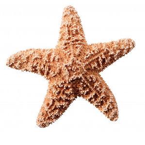 starfish.jpg