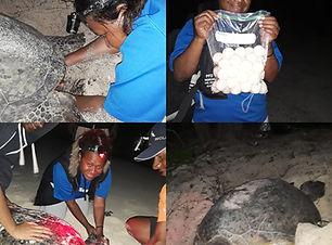 Conservation Ranger PNG