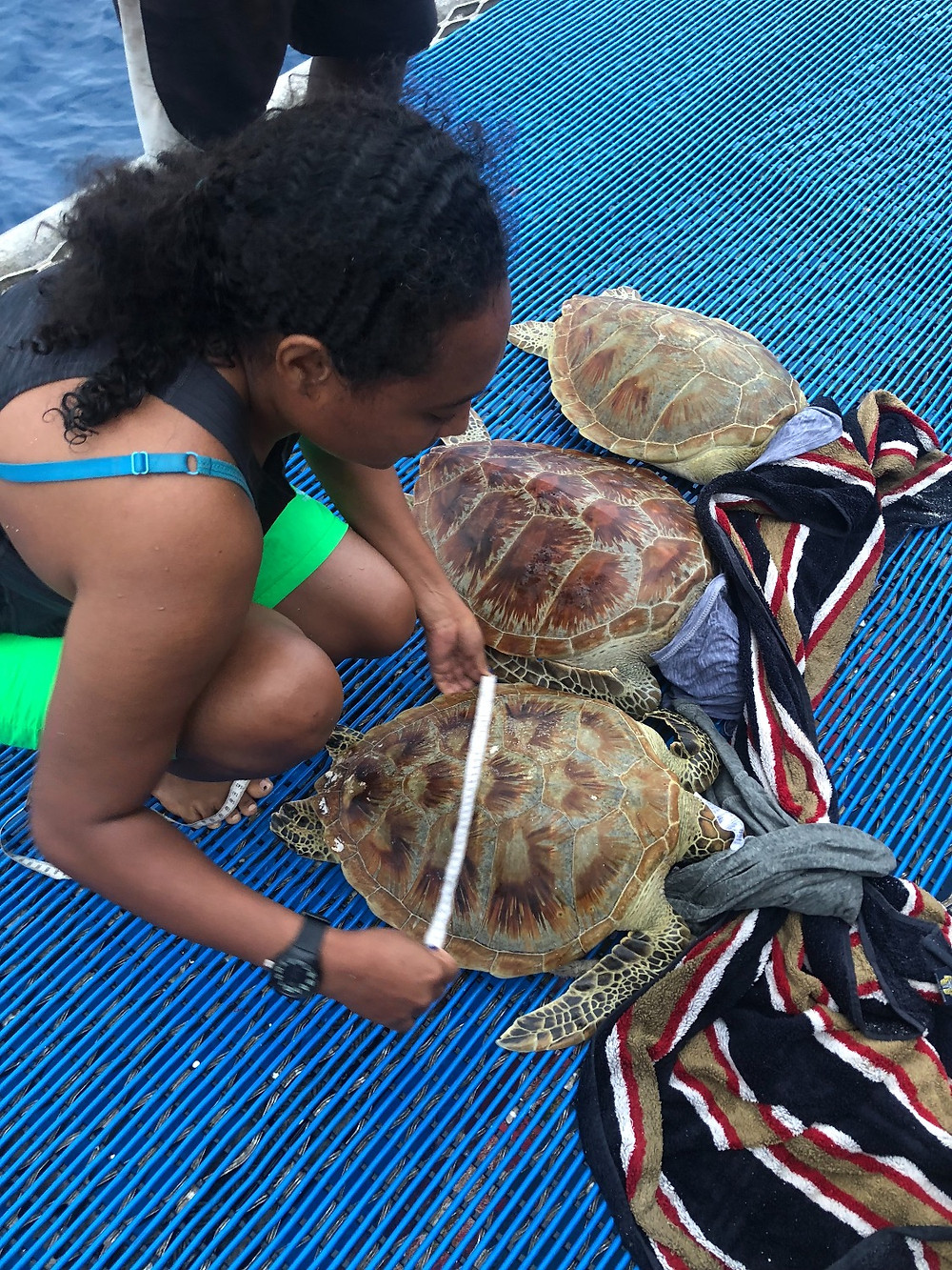 From turtle rodeo to collecting genetic samples and measuring turtles