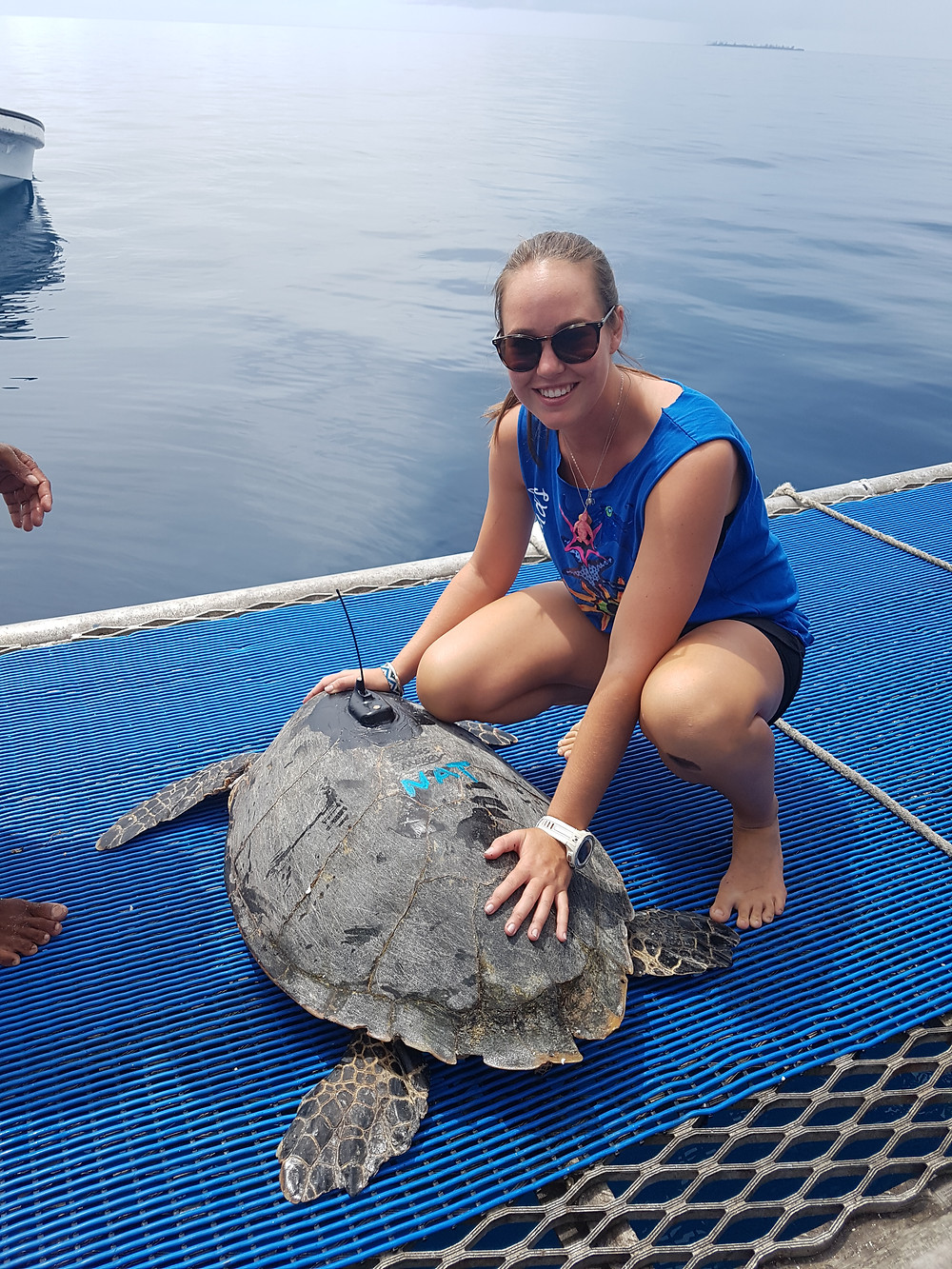 Natalie with a Hawksbill turtle tagged with satellite tracking