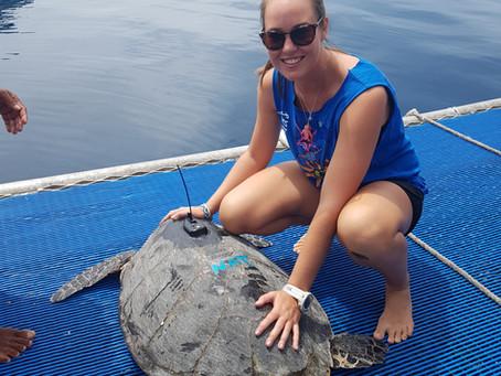 2017/18 Turtle Season Summary