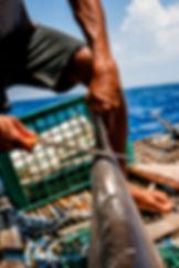 Fisherman cutting the fin off a shark