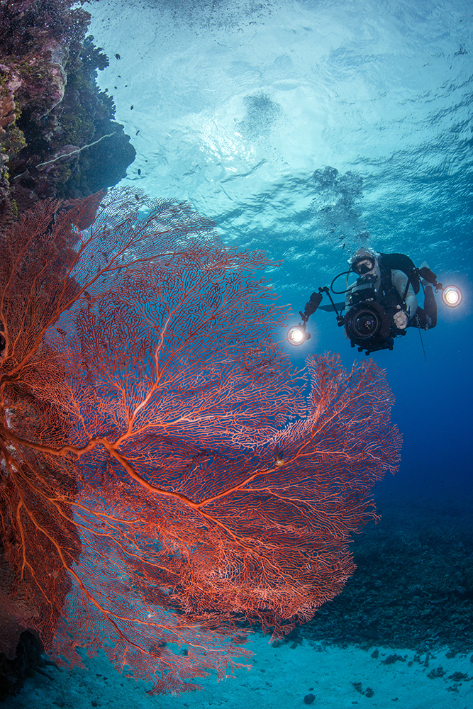 reef with photographer