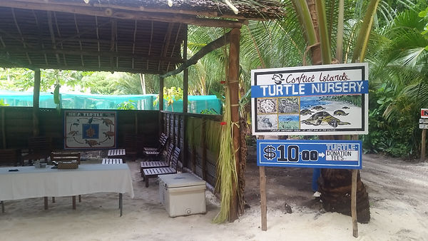 Turtle Nursery, a home for turtles