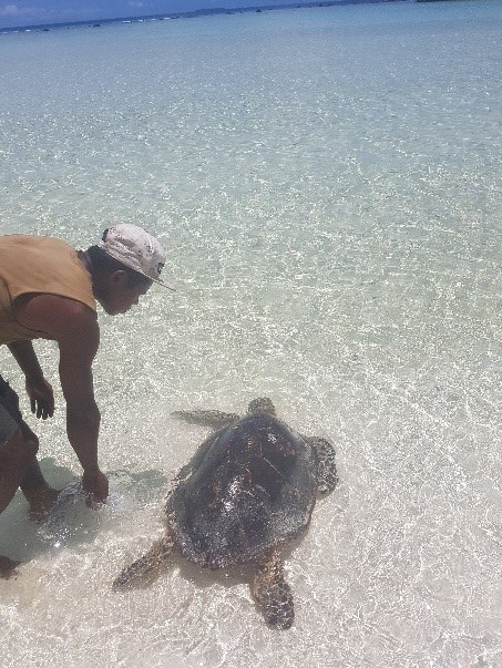 Guiding a wounded turtle back to sea