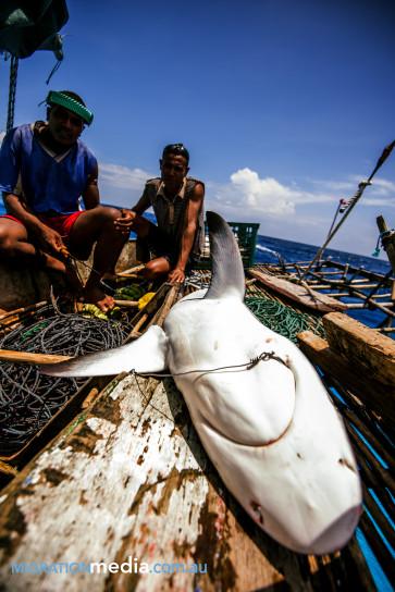 shark-on-boat-363x544