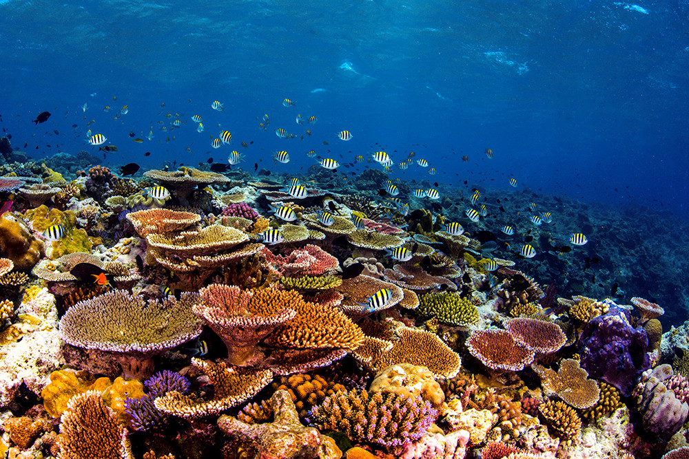 The reefs beaming with life