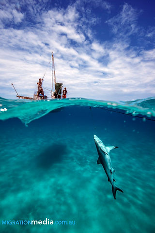 Fishermen pulling up a reef shark. The fins will be cut off and sold.
