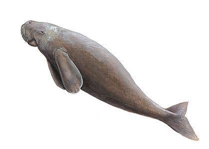 dugong.jpg