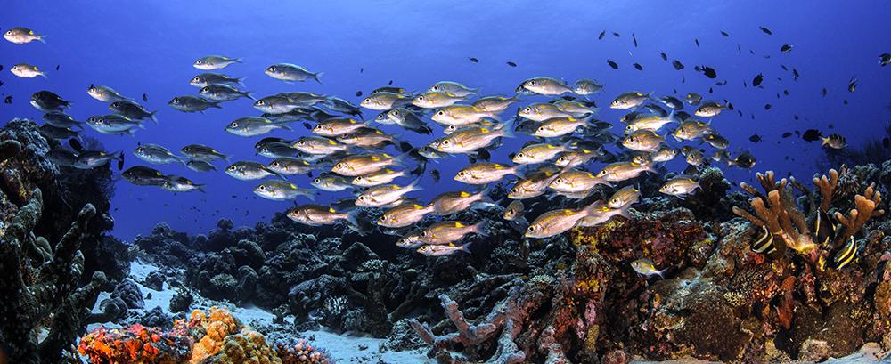 amazing fish life