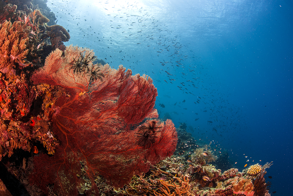 scuba diving on coral reefs